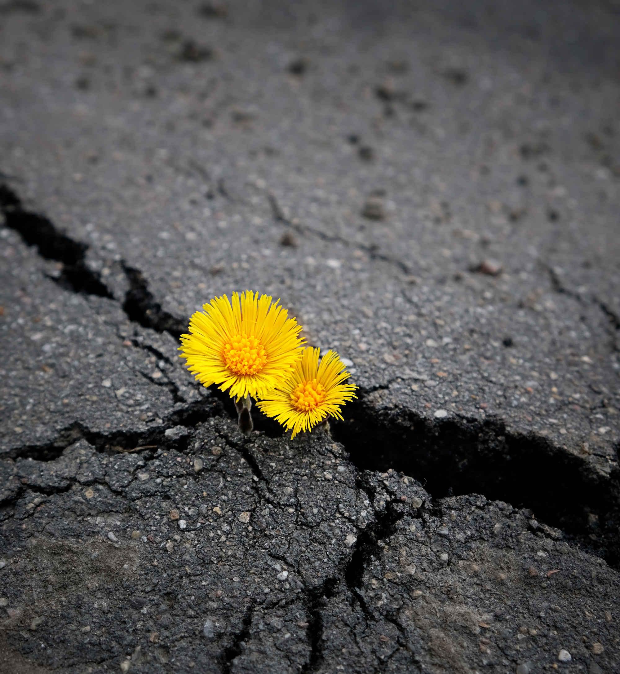 Widerständige Blume, c: Shutterstock 1294935649